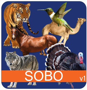 portfolio application mobile android sobo
